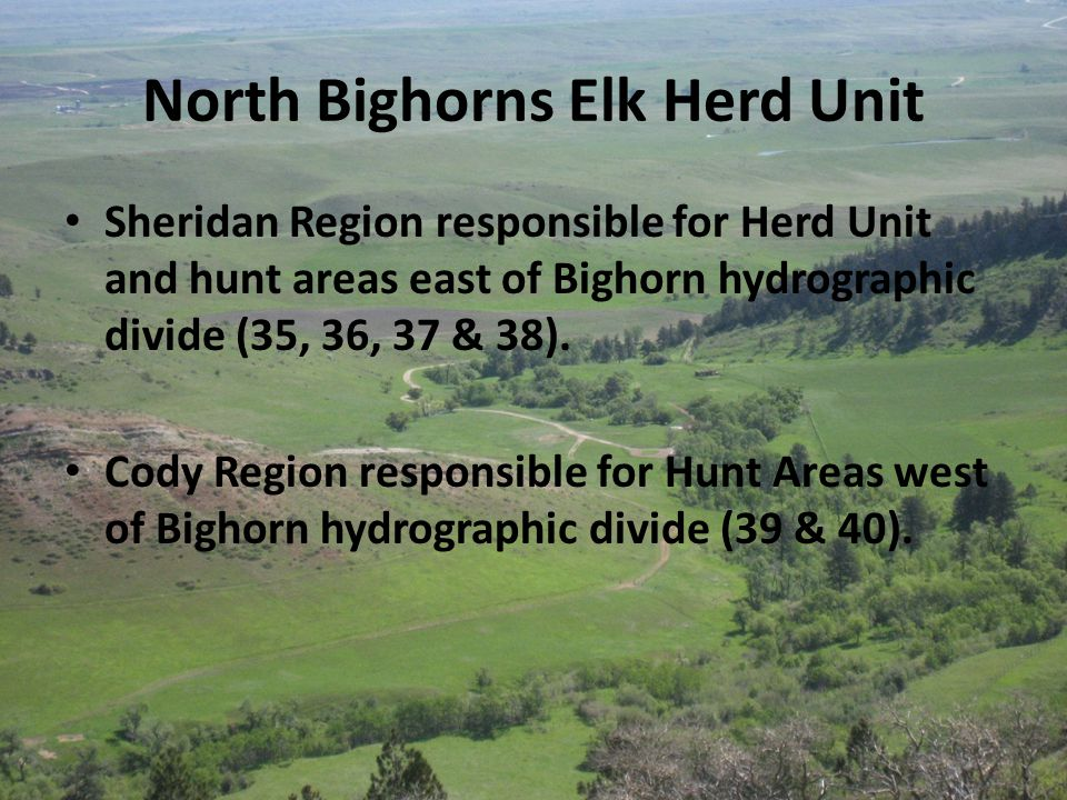 North Bighorns Elk Herd Unit Sheridan Region responsible for Herd Unit and hunt areas east of Bighorn hydrographic divide (35, 36, 37 & 38).