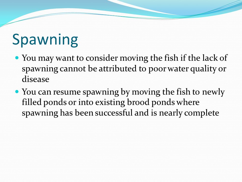 Spawning You may want to consider moving the fish if the lack of spawning cannot be attributed to poor water quality or disease You can resume spawnin