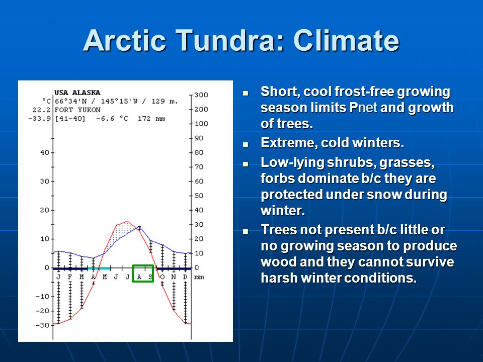 Arctic Tundra: Climate Short, cool frost-free growing season limits Pnet and growth of trees.