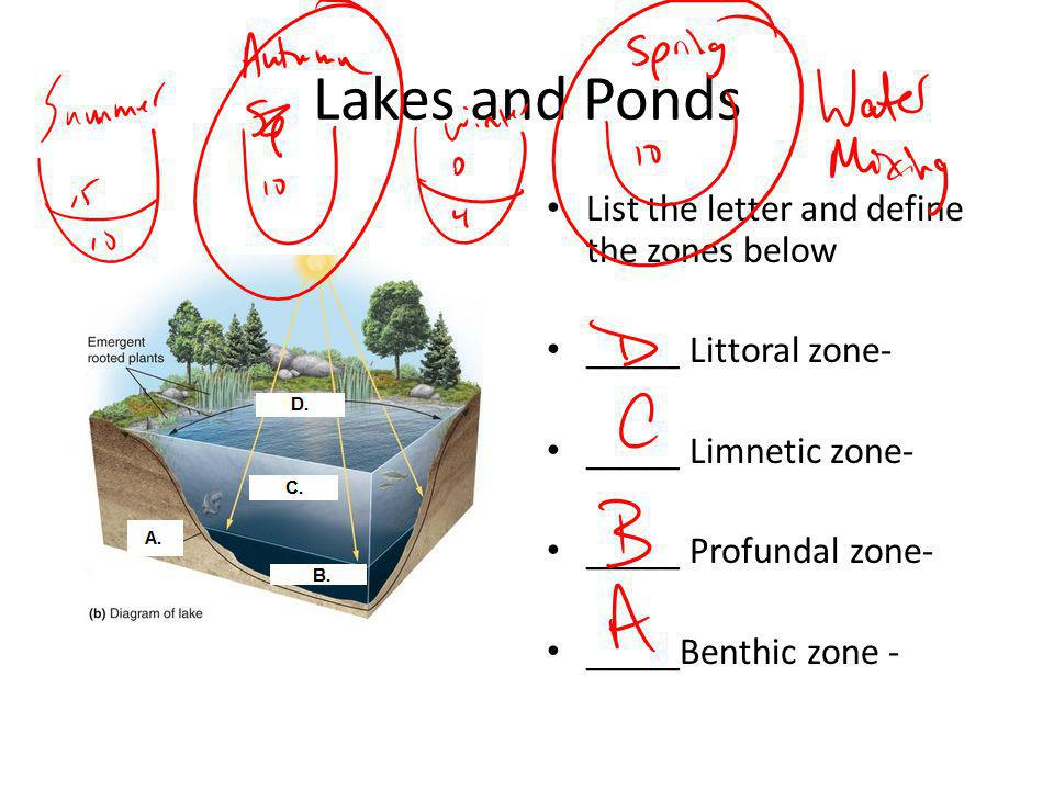 Lakes and Ponds List the letter and define the zones below _____ Littoral zone- _____ Limnetic zone- _____ Profundal zone- _____Benthic zone -