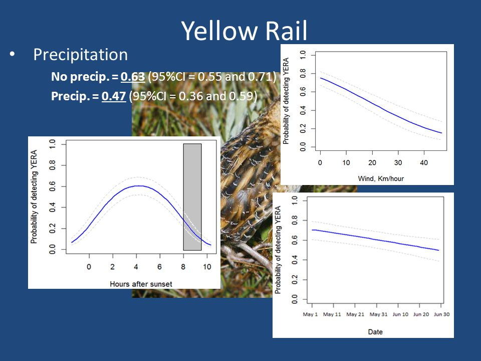 Yellow Rail Precipitation No precip. = 0.63 (95%CI = 0.55 and 0.71) Precip.
