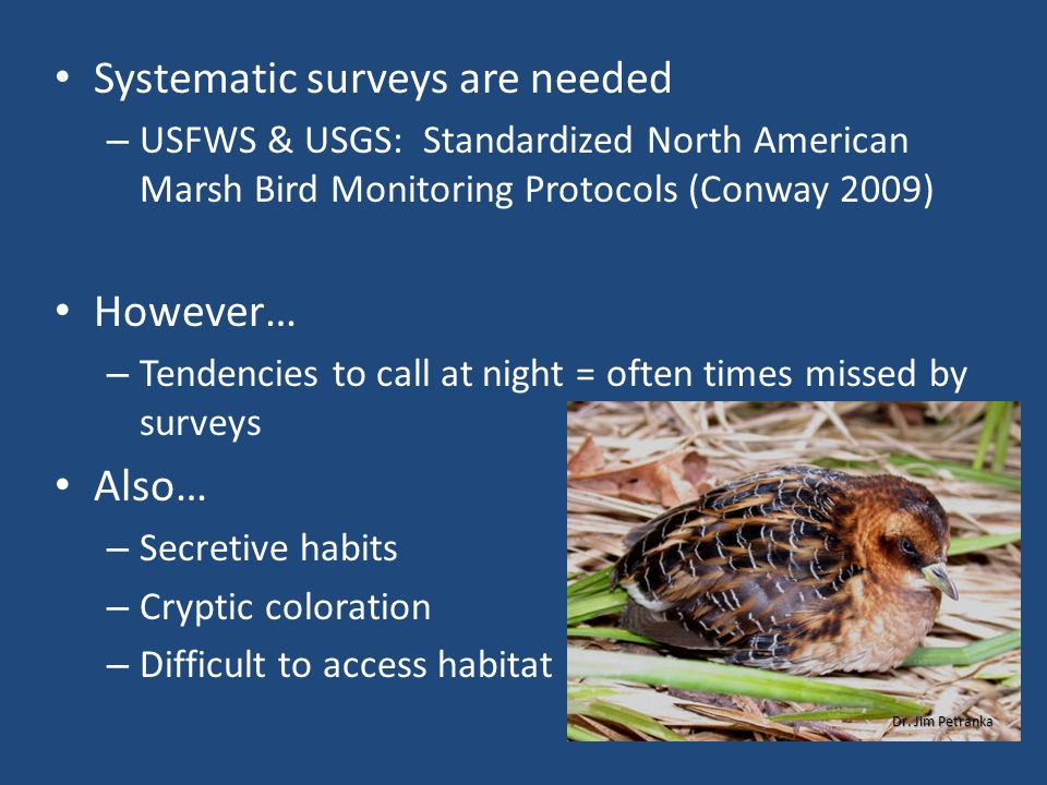 Systematic surveys are needed – USFWS & USGS: Standardized North American Marsh Bird Monitoring Protocols (Conway 2009) However… – Tendencies to call