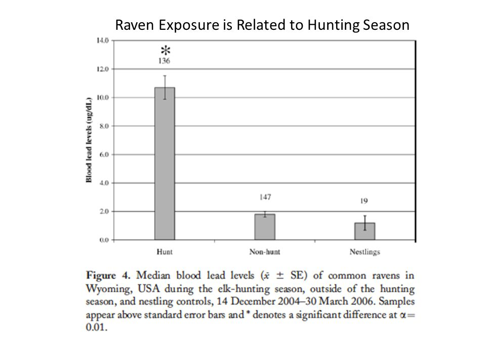 Raven Exposure is Related to Hunting Season