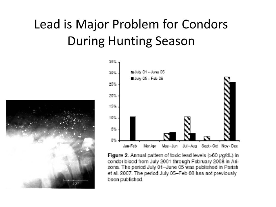 Lead is Major Problem for Condors During Hunting Season