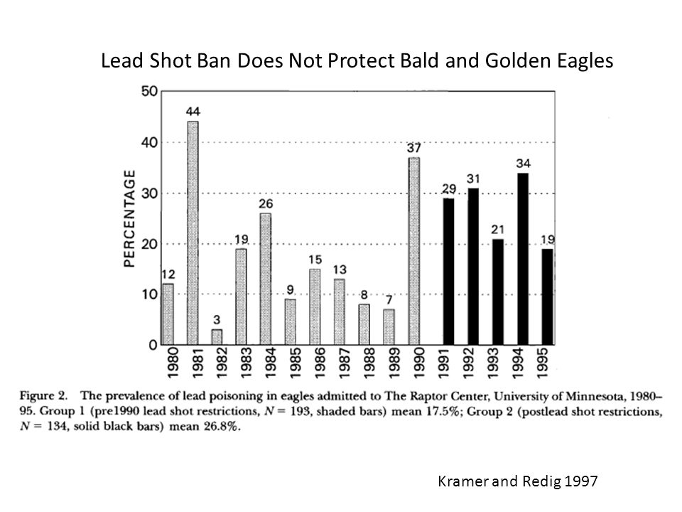 Lead Shot Ban Does Not Protect Bald and Golden Eagles Kramer and Redig 1997
