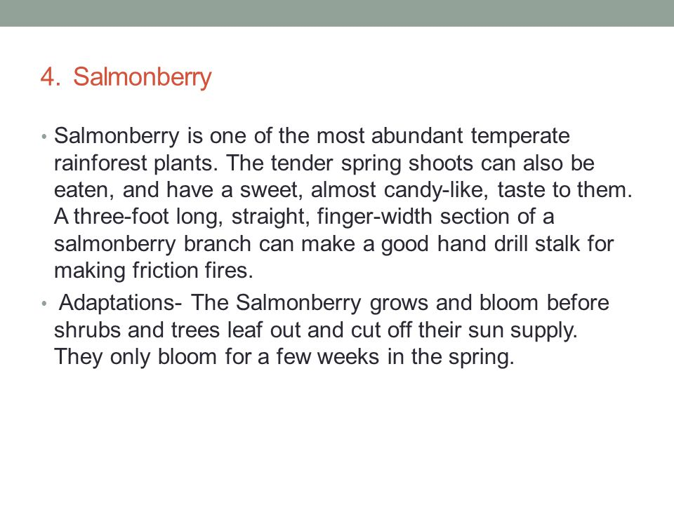 4. Salmonberry Salmonberry is one of the most abundant temperate rainforest plants.