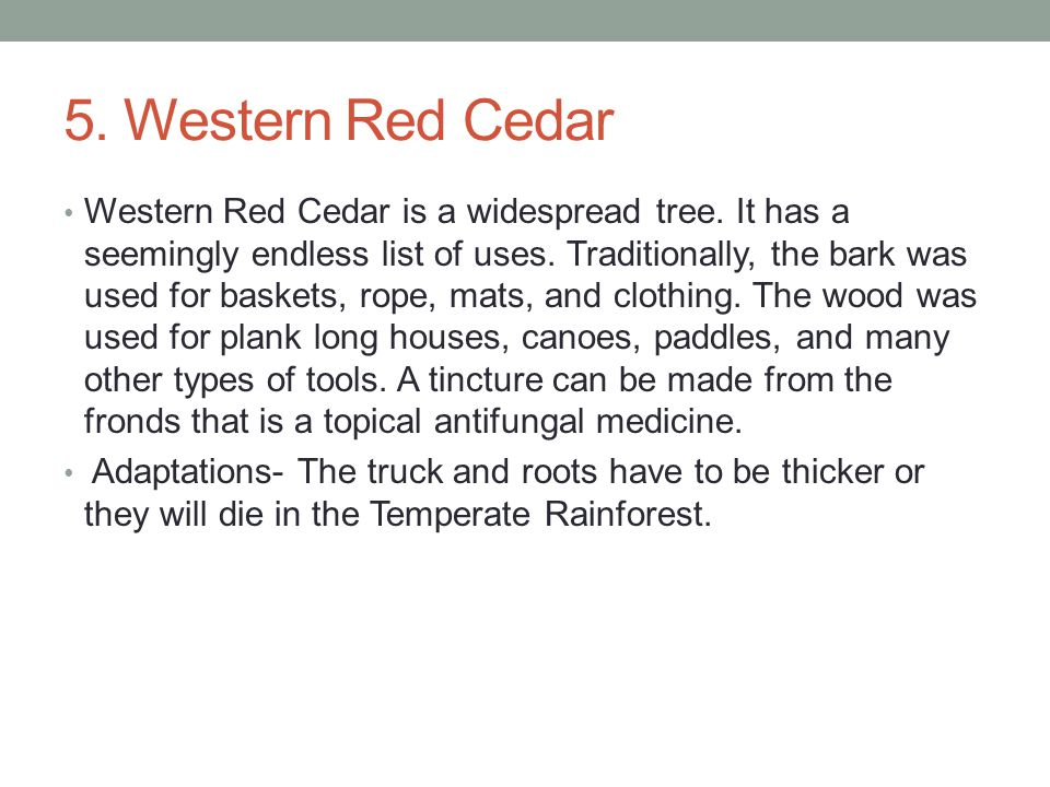 5. Western Red Cedar Western Red Cedar is a widespread tree.