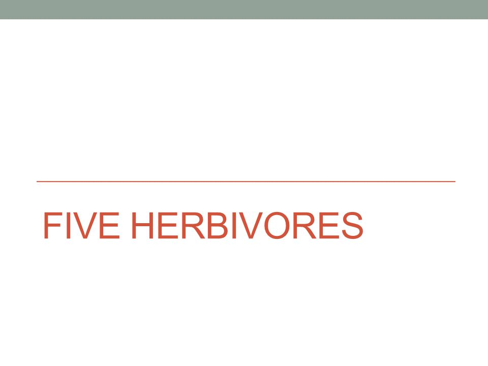 FIVE HERBIVORES