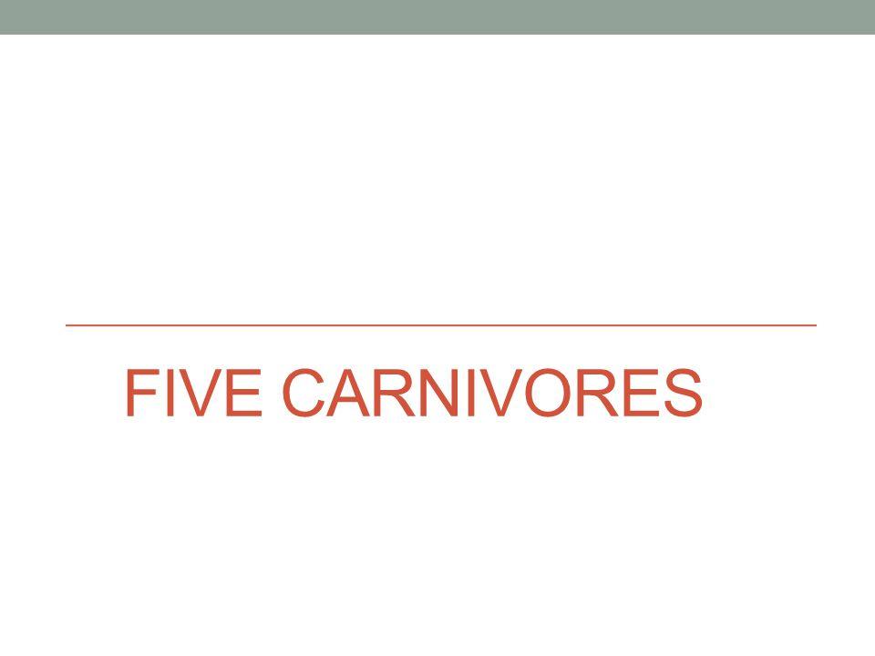 FIVE CARNIVORES