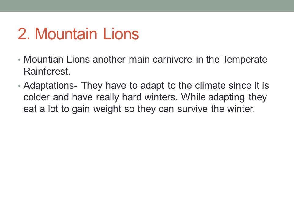 2. Mountain Lions Mountian Lions another main carnivore in the Temperate Rainforest.