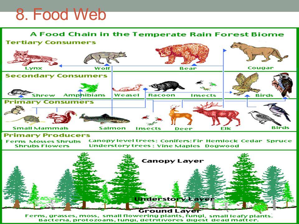 8. Food Web