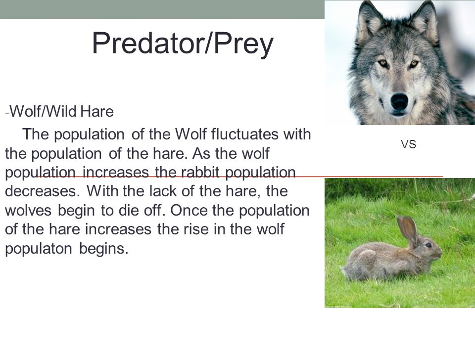 - Wolf/Wild Hare The population of the Wolf fluctuates with the population of the hare.
