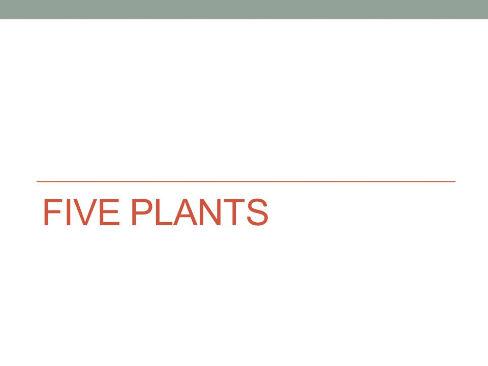 FIVE PLANTS