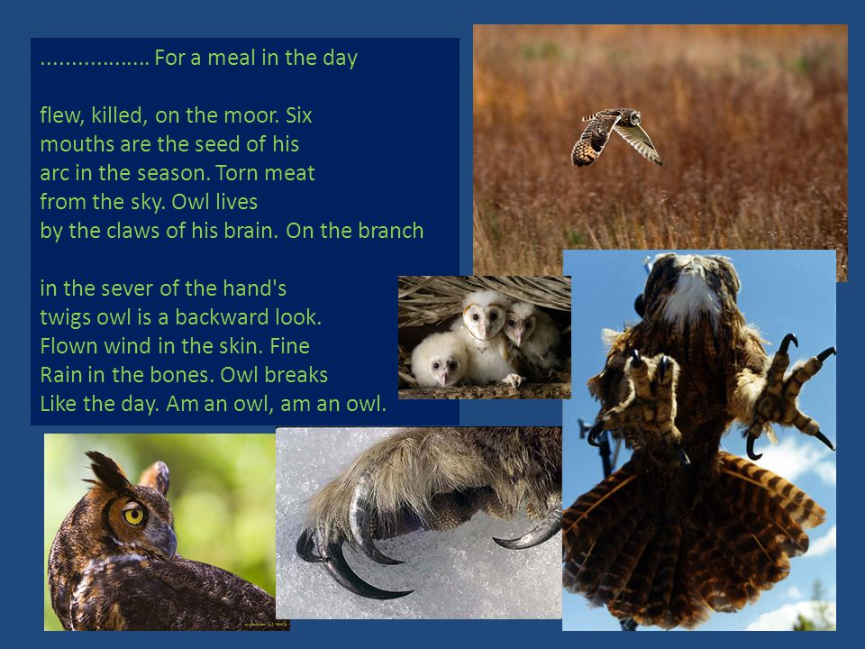 .................. For a meal in the day flew, killed, on the moor. Six mouths are the seed of his arc in the season. Torn meat from the sky. Owl live