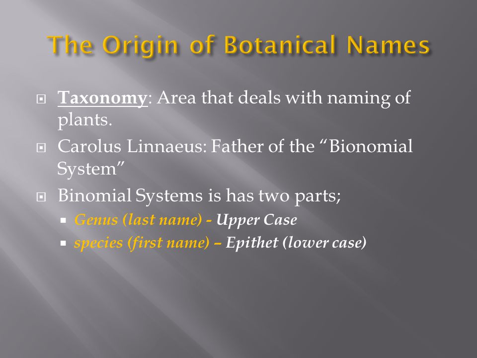 Botanical nomenclature is the orderly classification and naming of plants.