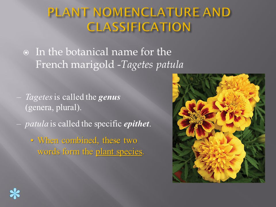 Taxonomy : Area that deals with naming of plants.