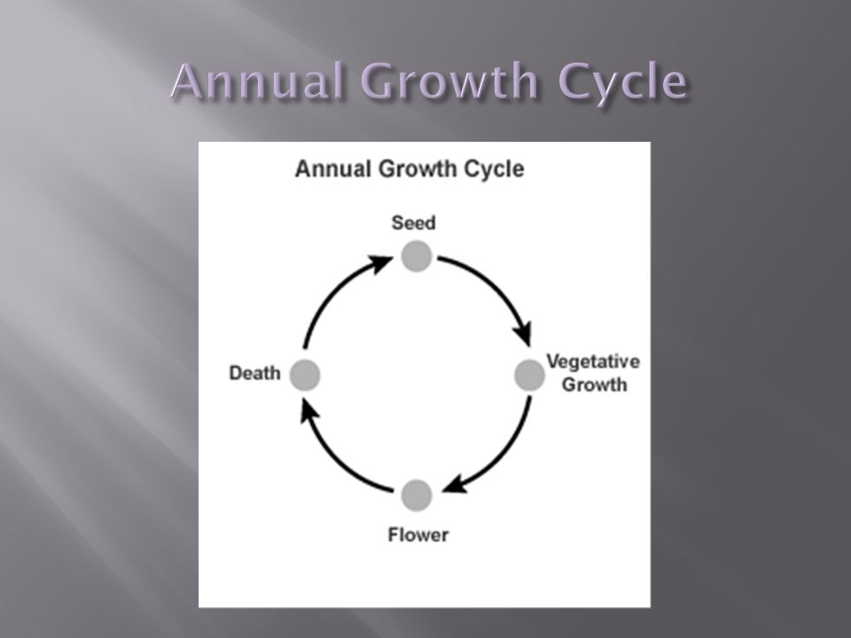 Plants are divided into three (3) life cycles (start to finish).