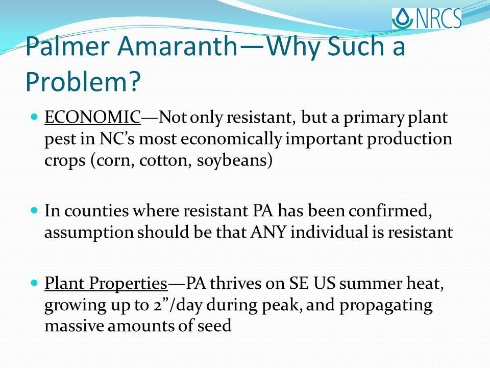 Palmer AmaranthWhy Such a Problem.