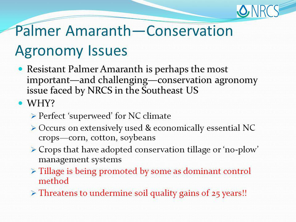 Palmer AmaranthConservation Agronomy Issues Resistant Palmer Amaranth is perhaps the most importantand challengingconservation agronomy issue faced by NRCS in the Southeast US WHY.