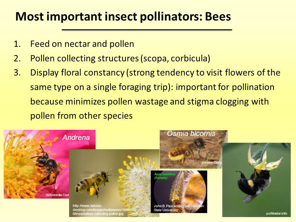 Why are bees important.