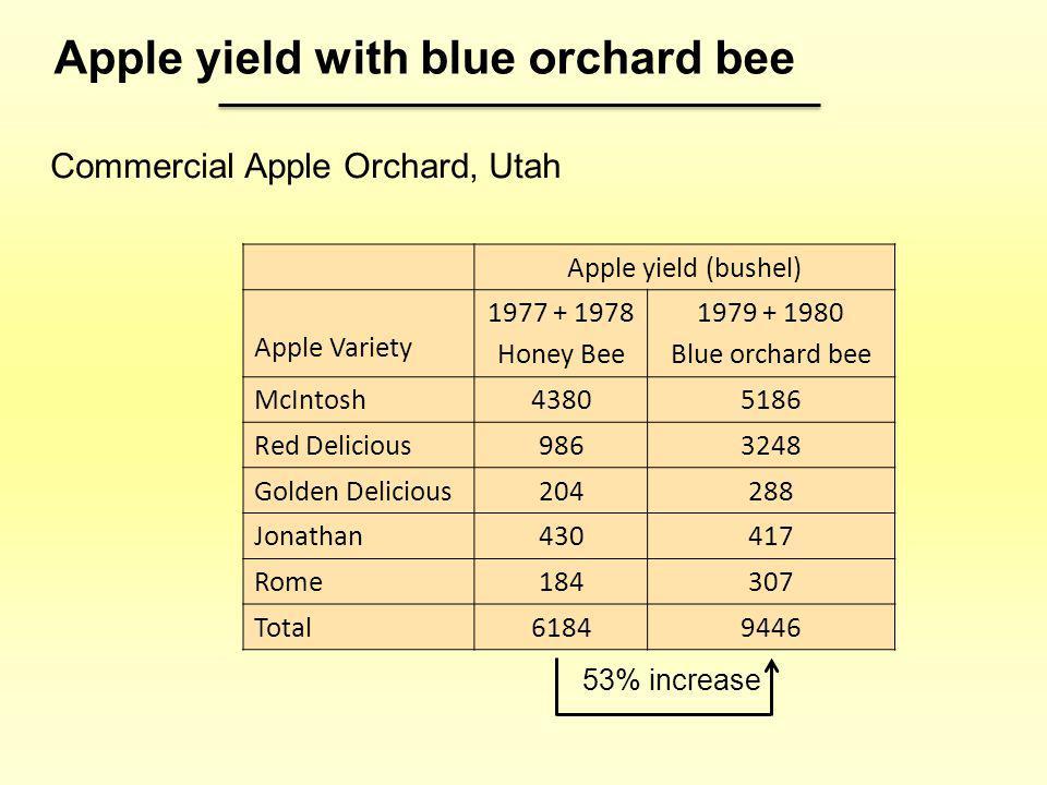 Apple yield (bushel) Apple Variety 1977 + 1978 Honey Bee 1979 + 1980 Blue orchard bee McIntosh43805186 Red Delicious9863248 Golden Delicious204288 Jon