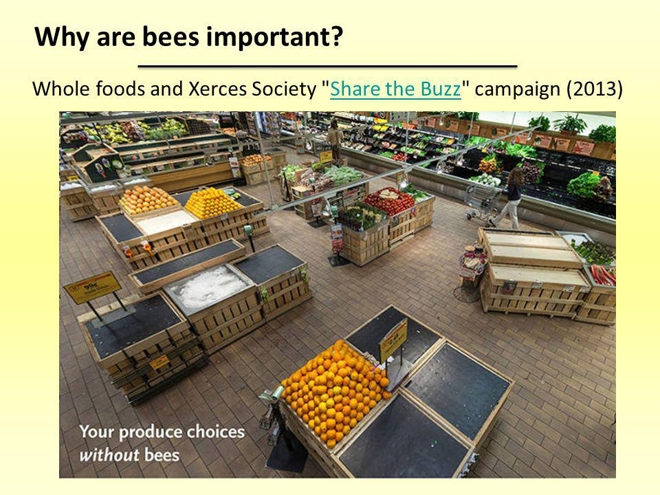 Why are bees important? Whole foods and Xerces Society