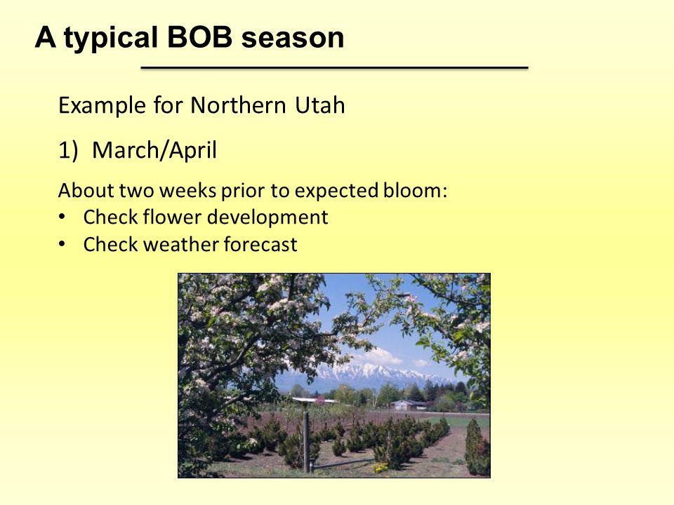 Example for Northern Utah 1)March/April About two weeks prior to expected bloom: Check flower development Check weather forecast A typical BOB season