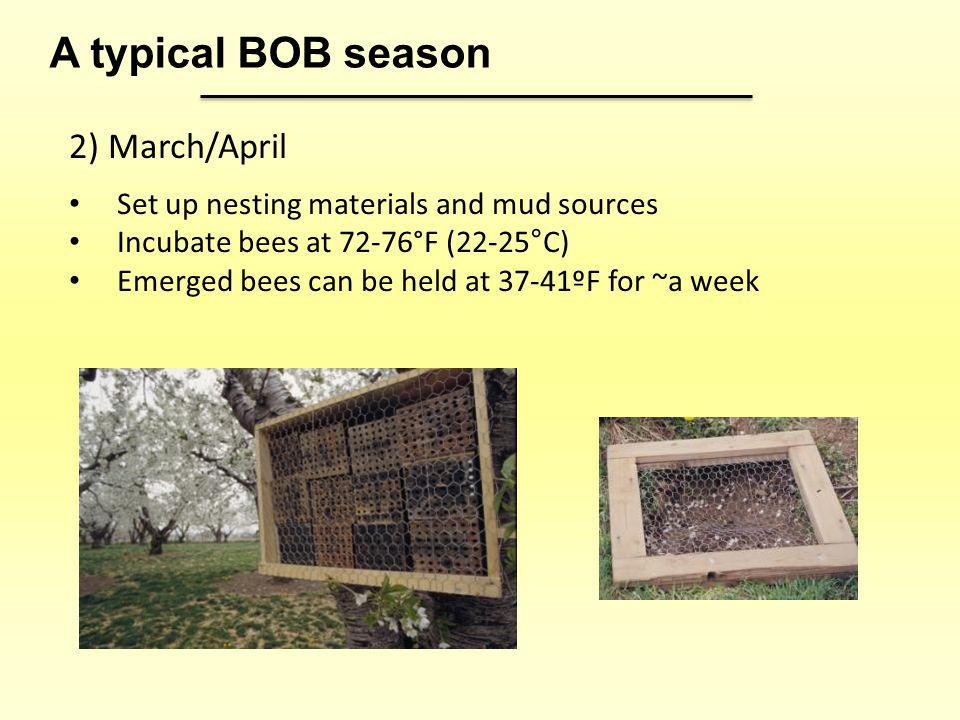 2) March/April Set up nesting materials and mud sources Incubate bees at 72-76°F (22-25°C) Emerged bees can be held at 37-41ºF for ~a week A typical B