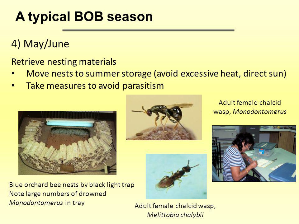 4) May/June Retrieve nesting materials Move nests to summer storage (avoid excessive heat, direct sun) Take measures to avoid parasitism A typical BOB