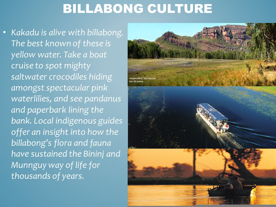 BILLABONG CULTURE Kakadu is alive with billabong. The best known of these is yellow water. Take a boat cruise to spot mighty saltwater crocodiles hidi