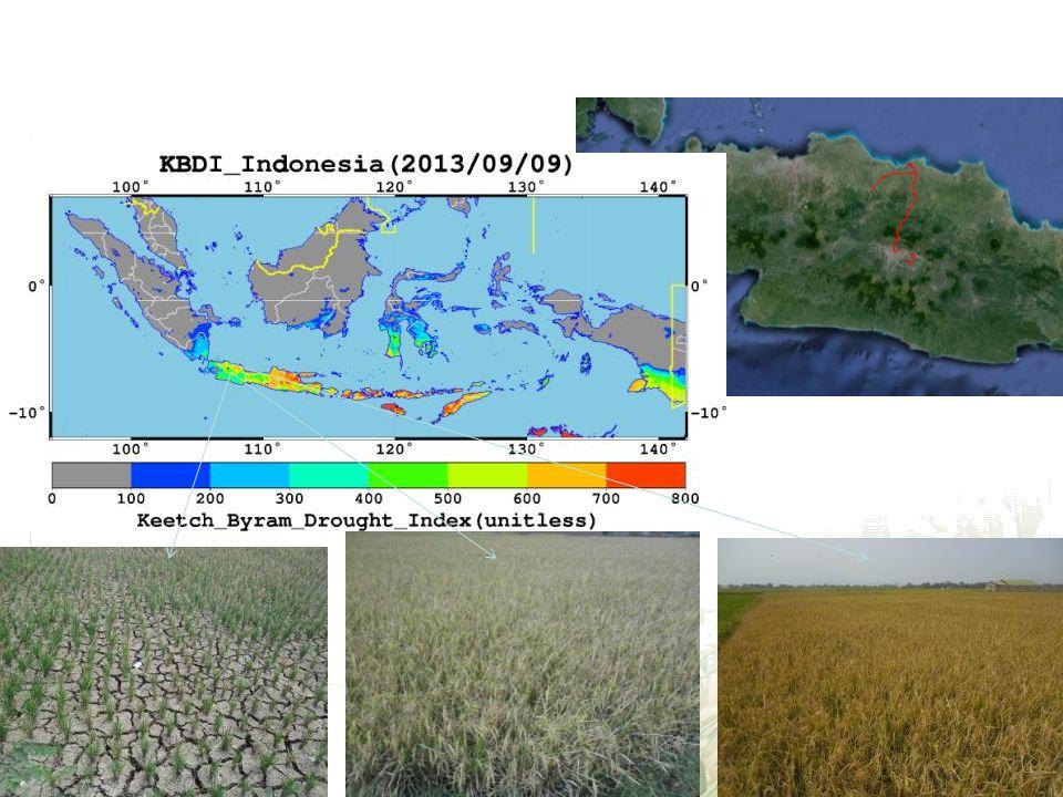 3. Ground survey for drought Kerawang & Bandung West Java