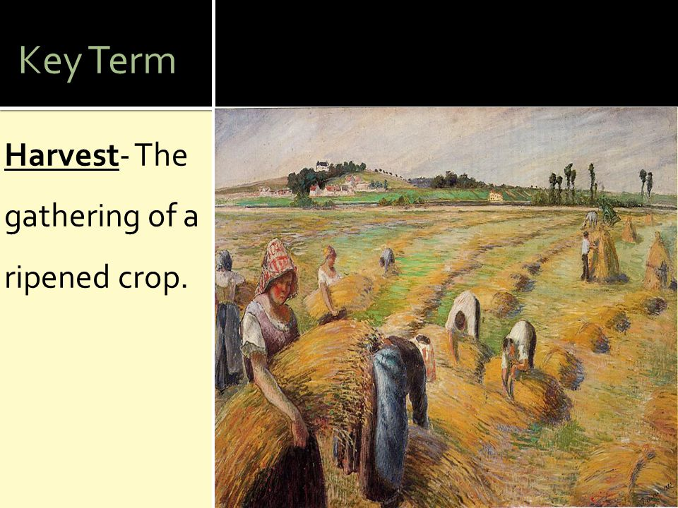 Key Term Harvest- The gathering of a ripened crop.