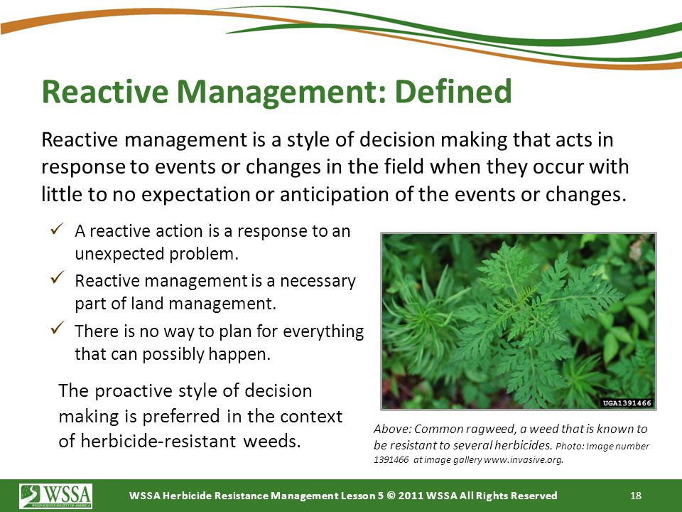 WSSA Herbicide Resistance Management Lesson 5 © 2011 WSSA All Rights Reserved 18 Reactive management is a style of decision making that acts in respon