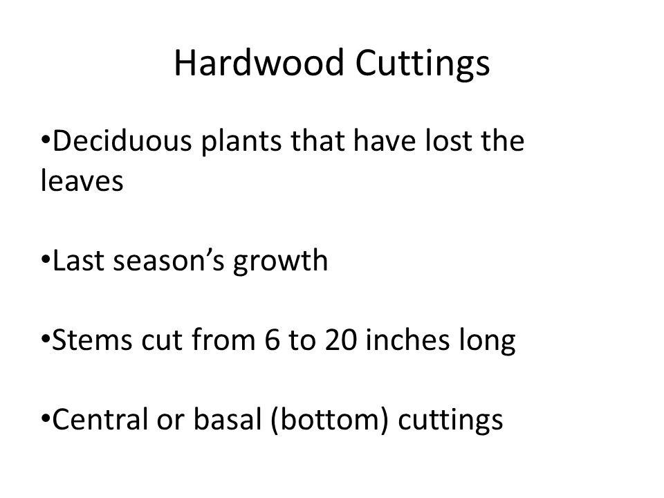 Hardwood Cuttings Deciduous plants that have lost the leaves Last seasons growth Stems cut from 6 to 20 inches long Central or basal (bottom) cuttings