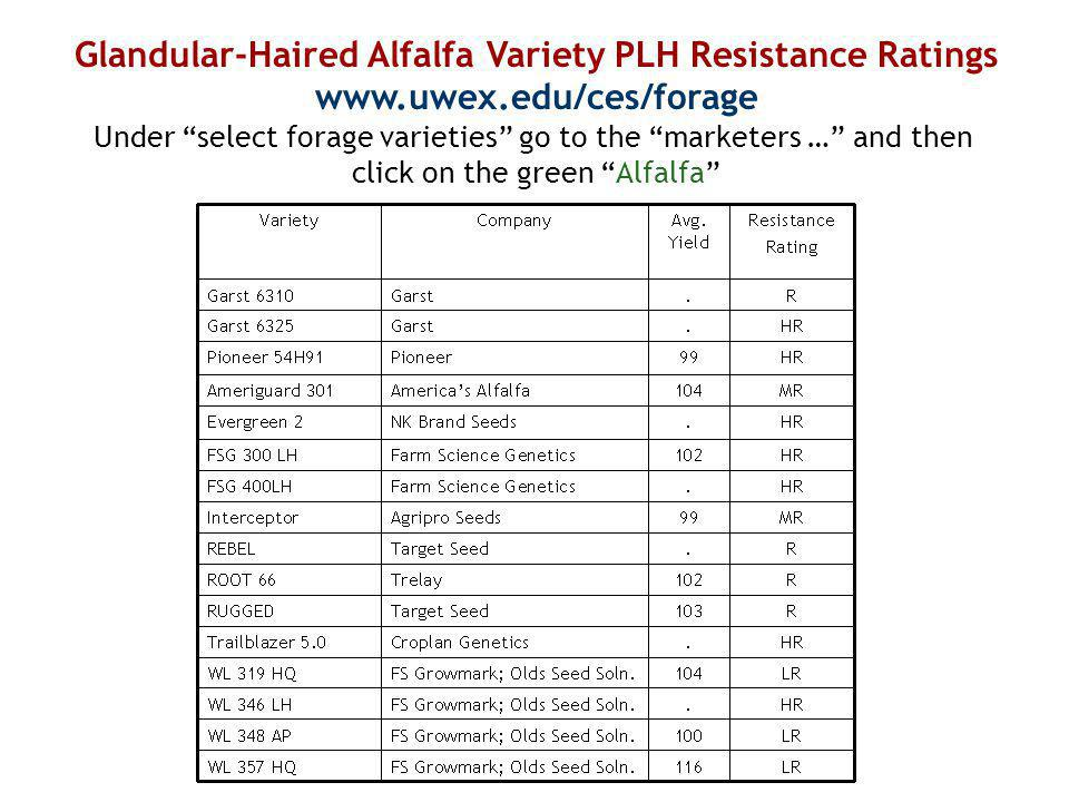 Glandular-Haired Alfalfa Variety PLH Resistance Ratings www.uwex.edu/ces/forage Under select forage varieties go to the marketers … and then click on