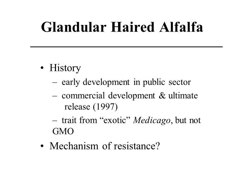 Glandular Haired Alfalfa History – early development in public sector – commercial development & ultimate release (1997) – trait from exotic Medicago,