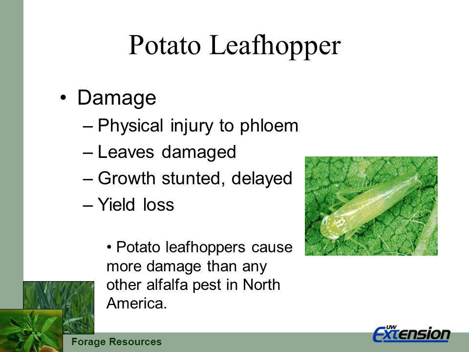 Forage Resources Potato Leafhopper Economic Thresholds The previous economic thresholds are a starting point.