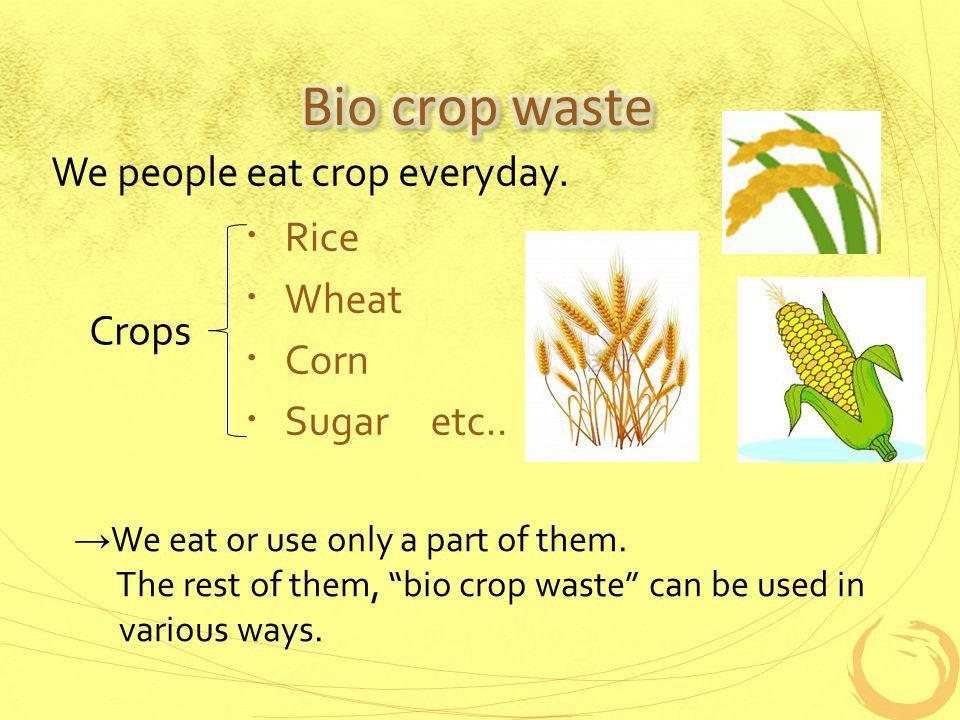 Rice Wheat Corn Sugar etc.. We people eat crop everyday.