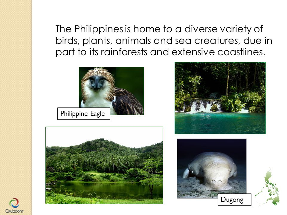 The Philippines is home to a diverse variety of birds, plants, animals and sea creatures, due in part to its rainforests and extensive coastlines.