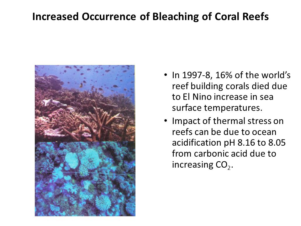 Increased Occurrence of Bleaching of Coral Reefs In 1997-8, 16% of the worlds reef building corals died due to El Nino increase in sea surface temperatures.