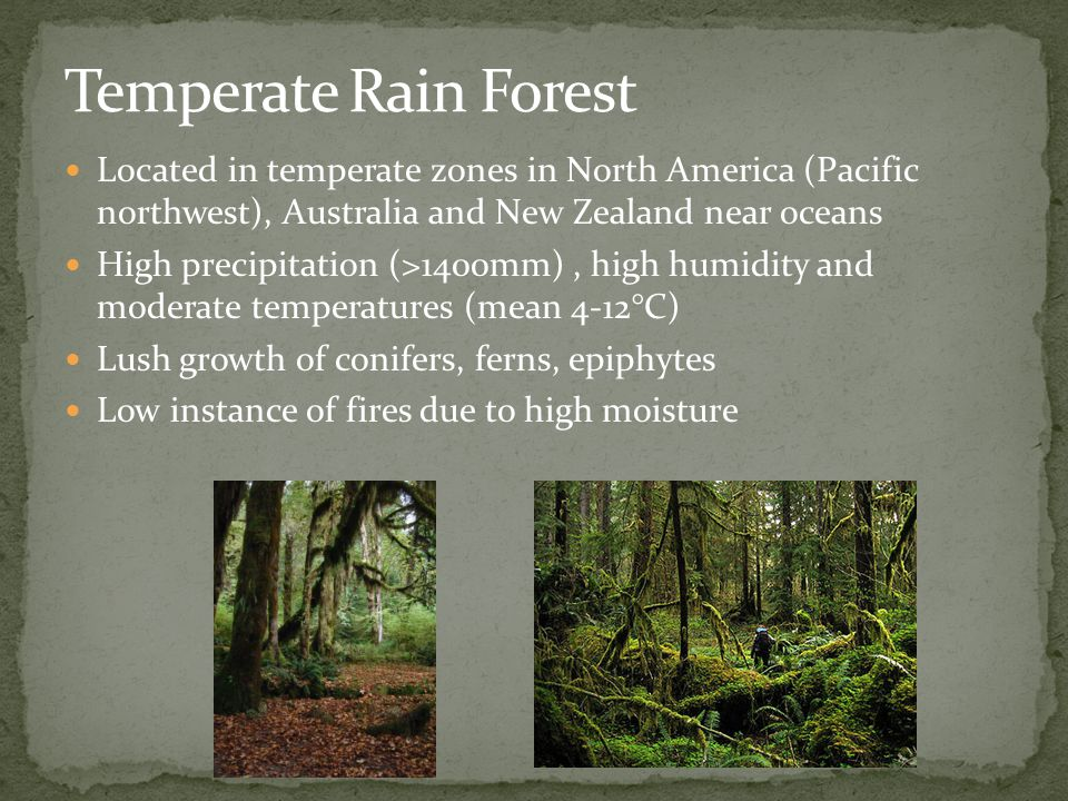 Located in temperate zones in North America (Pacific northwest), Australia and New Zealand near oceans High precipitation (>1400mm), high humidity and moderate temperatures (mean 4-12°C) Lush growth of conifers, ferns, epiphytes Low instance of fires due to high moisture