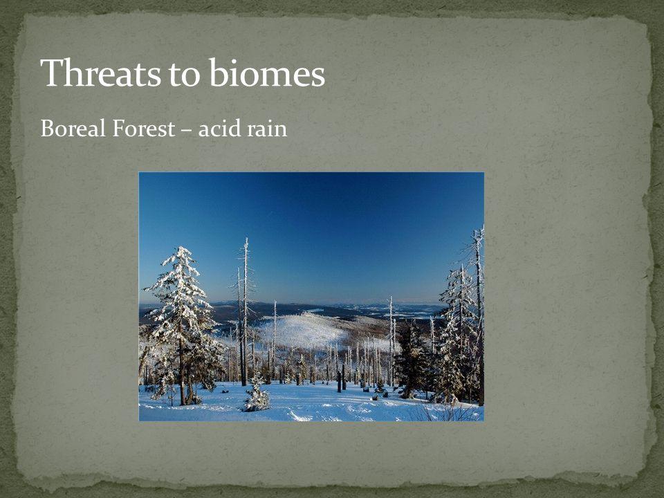 Boreal Forest – acid rain