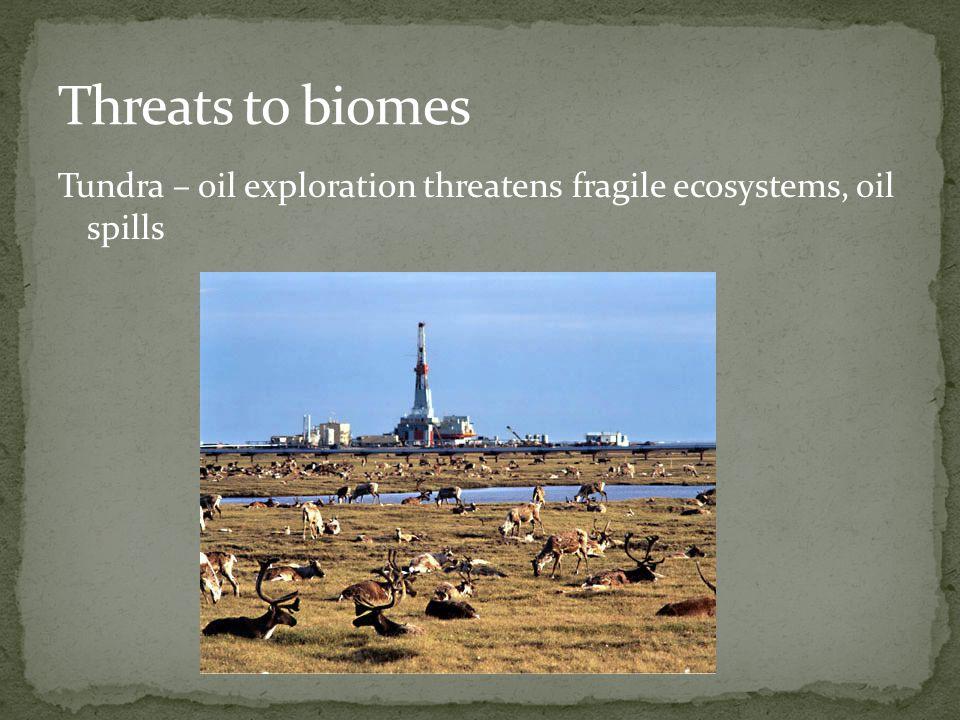 Tundra – oil exploration threatens fragile ecosystems, oil spills