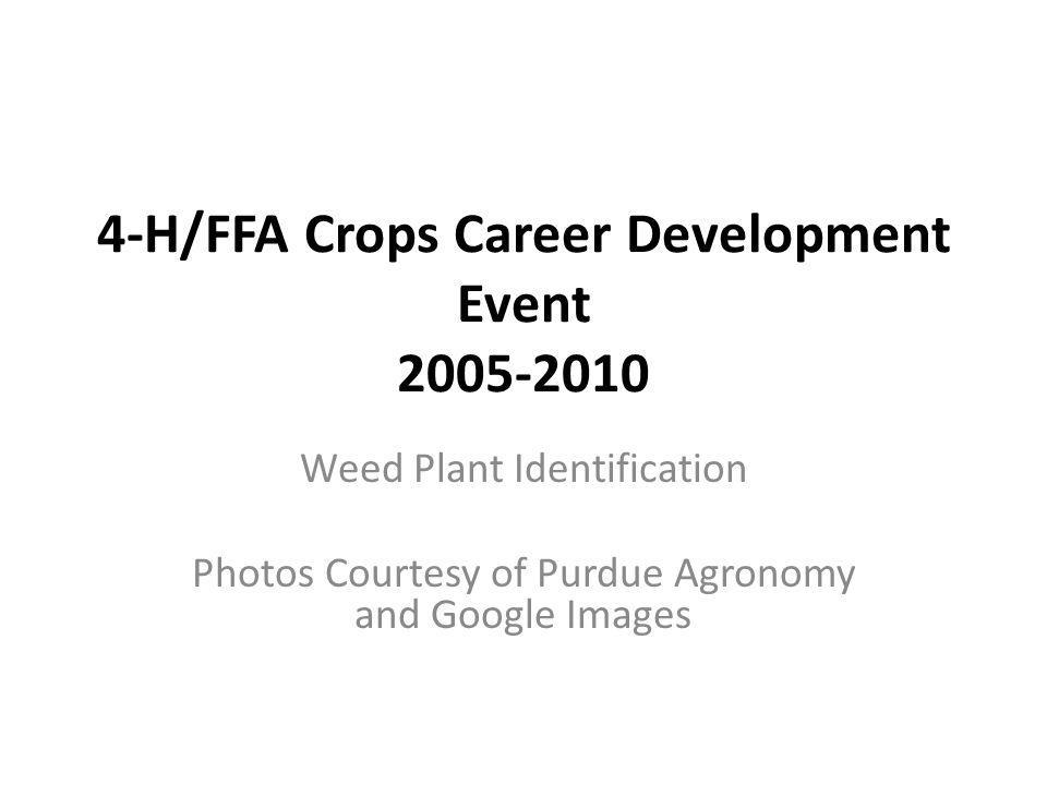 4-H/FFA Crops Career Development Event 2005-2010 Weed Plant Identification Photos Courtesy of Purdue Agronomy and Google Images