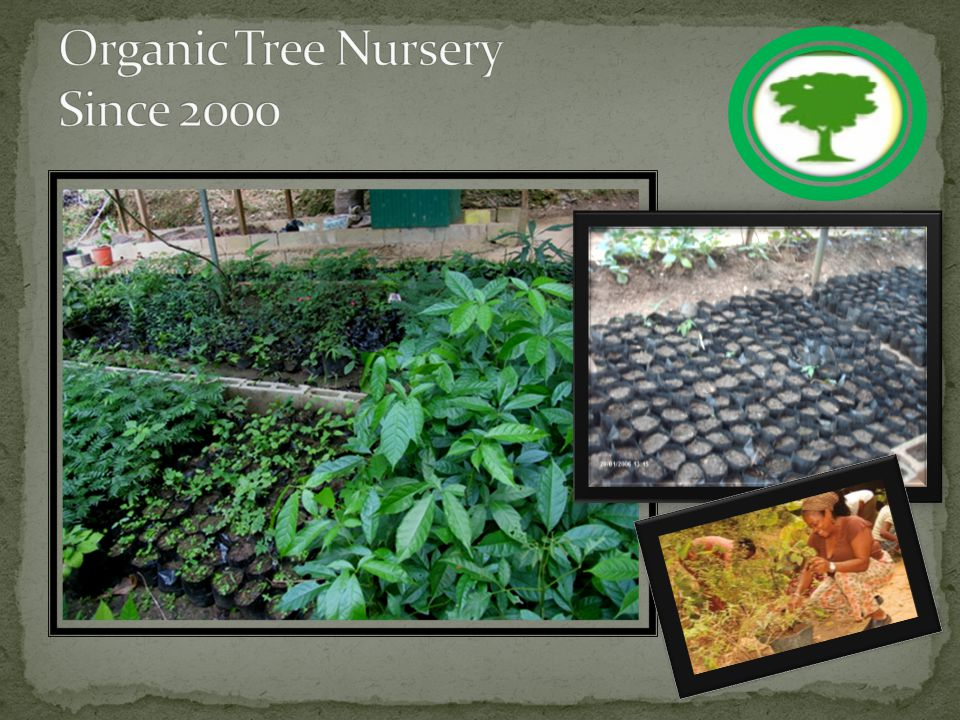 The FACRP has a fully operational organic nursery that facilitates the annual reforestation efforts The FACRP plants approximately 4000 trees each rainy season The FACRP has been fire free since 1997 The FACRP currently reaches over 1,500 students each year through our environmental packages and events Our Annual Gayap is growing bigger each year this year - 2012 over 400 students participated in day 1 events The Fondes Amandes community has been transformed from a fire climax zone to a green and lush conserved area with high bird could and other wildlife species