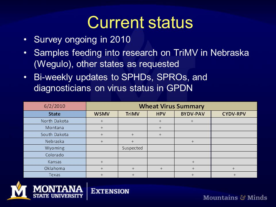 Current status Survey ongoing in 2010 Samples feeding into research on TriMV in Nebraska (Wegulo), other states as requested Bi-weekly updates to SPHDs, SPROs, and diagnosticians on virus status in GPDN
