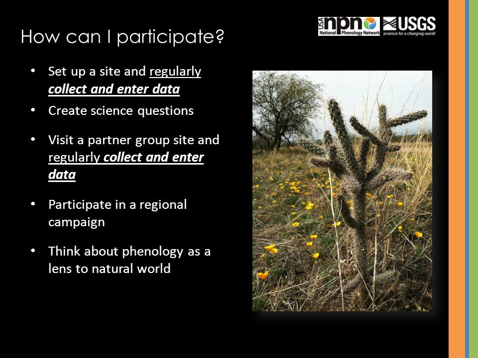 Set up a site and regularly collect and enter data Create science questions Visit a partner group site and regularly collect and enter data Participate in a regional campaign Think about phenology as a lens to natural world How can I participate?