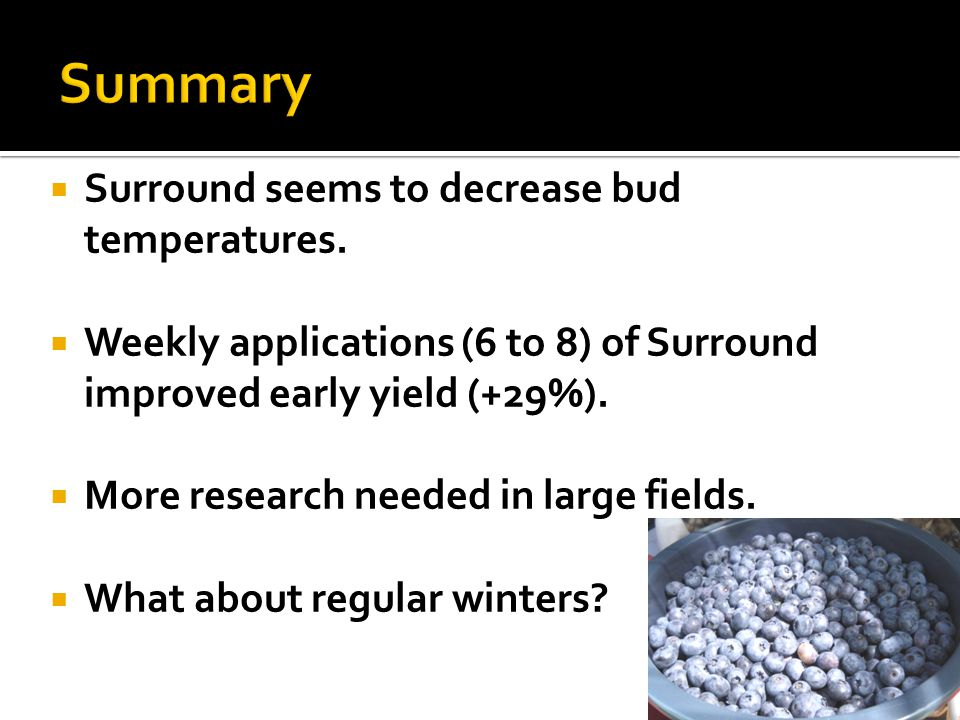 Surround seems to decrease bud temperatures. Weekly applications (6 to 8) of Surround improved early yield (+29%). More research needed in large field