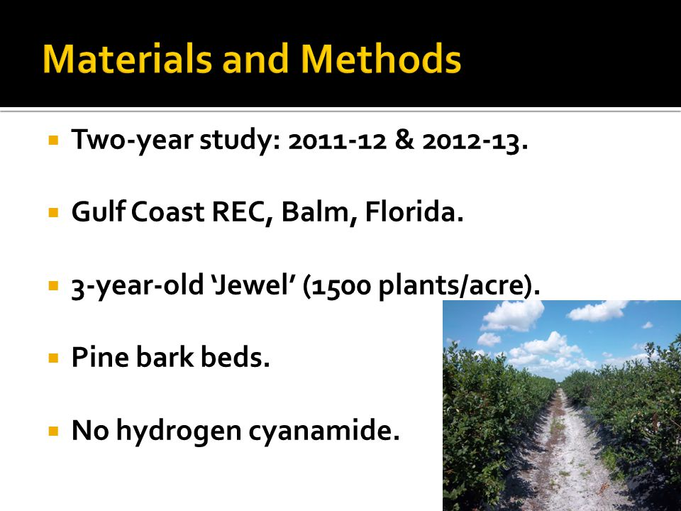 Two-year study: 2011-12 & 2012-13. Gulf Coast REC, Balm, Florida. 3-year-old Jewel (1500 plants/acre). Pine bark beds. No hydrogen cyanamide.