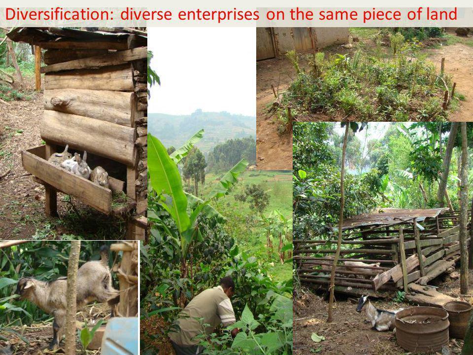 14 Diversification: diverse enterprises on the same piece of land